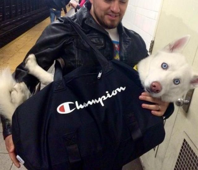 画像1: 思わず笑ってしまう鞄に入る犬たちの写真