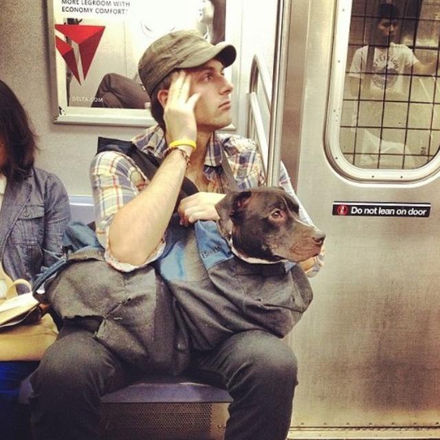 画像: 「鞄に入らない犬は地下鉄禁止」