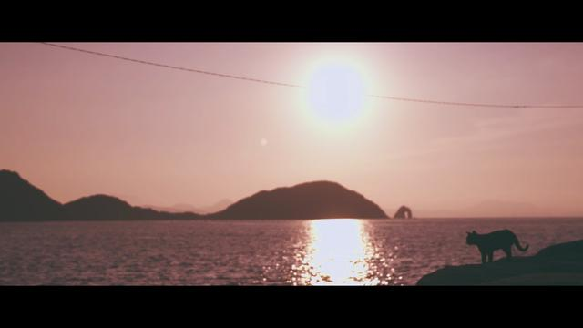 画像2: 「世界6大猫スポット」の1つ相島