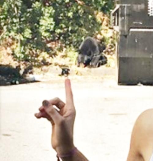 画像2: クマと踊る…!?