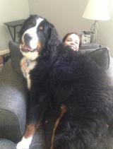 画像5: 大型犬あるある!?