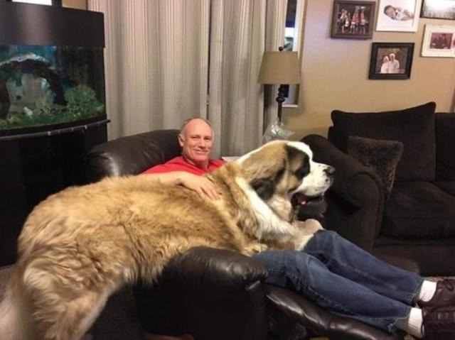 画像4: 大型犬あるある!?