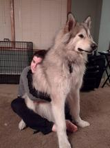画像7: 大型犬あるある!?
