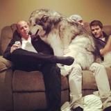 画像1: 大型犬あるある!?