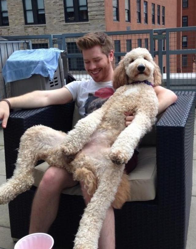画像3: 大型犬あるある!?