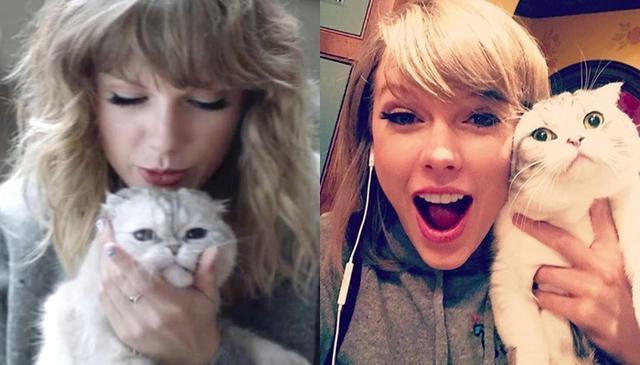 画像: テイラーが2011年から飼っている愛猫のメレディス(右)と2014年に飼い始めたオリヴィア(左)。©Taylor Swift