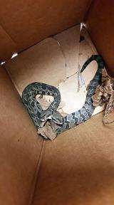 画像: 頭を2つ持つヘビが登場し、奇妙すぎる姿に大騒ぎ