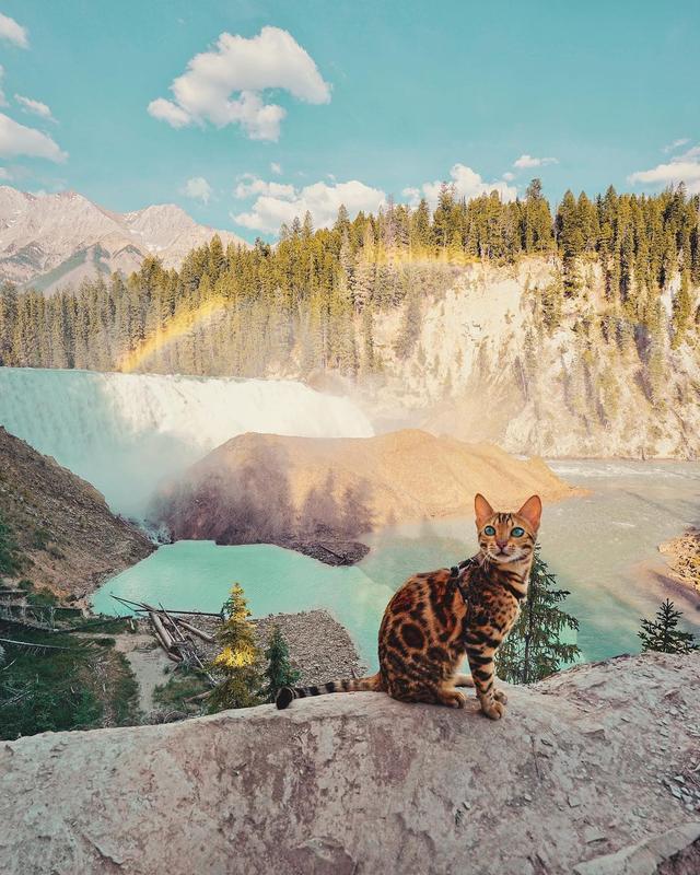 画像4: ヒョウ柄ネコで人気上昇中