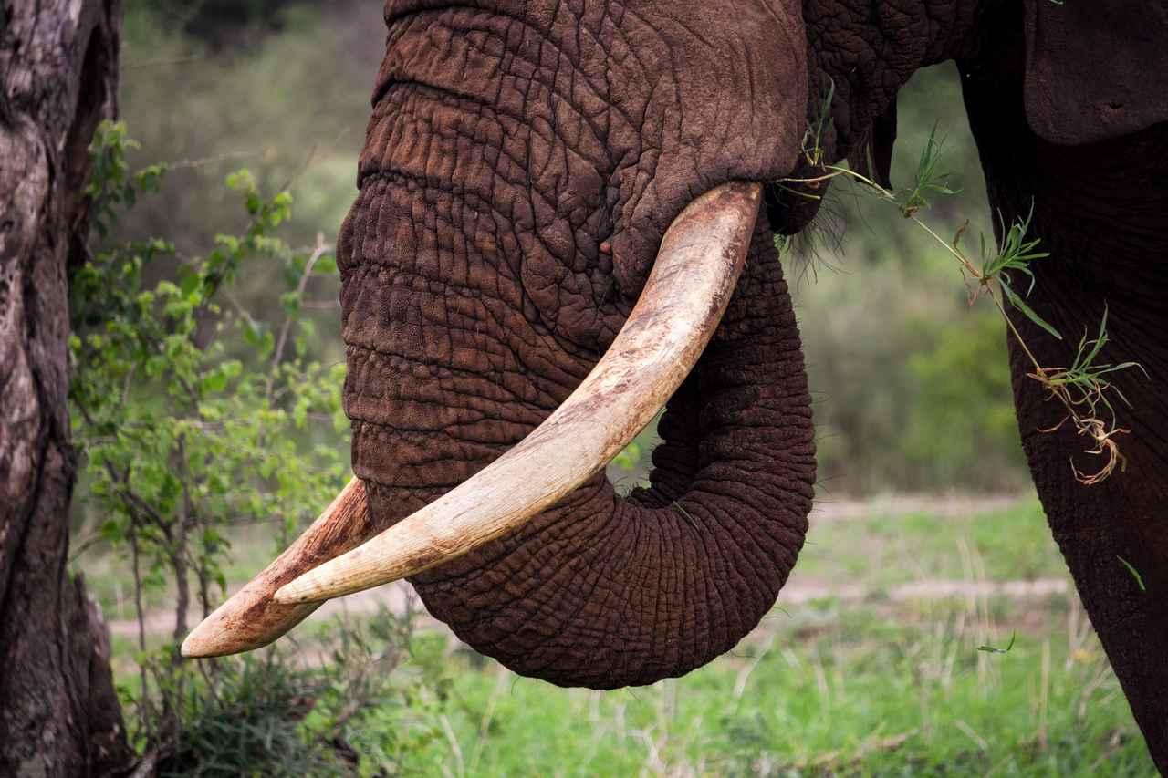 画像1: 象のアクセサリーが訴えるもの