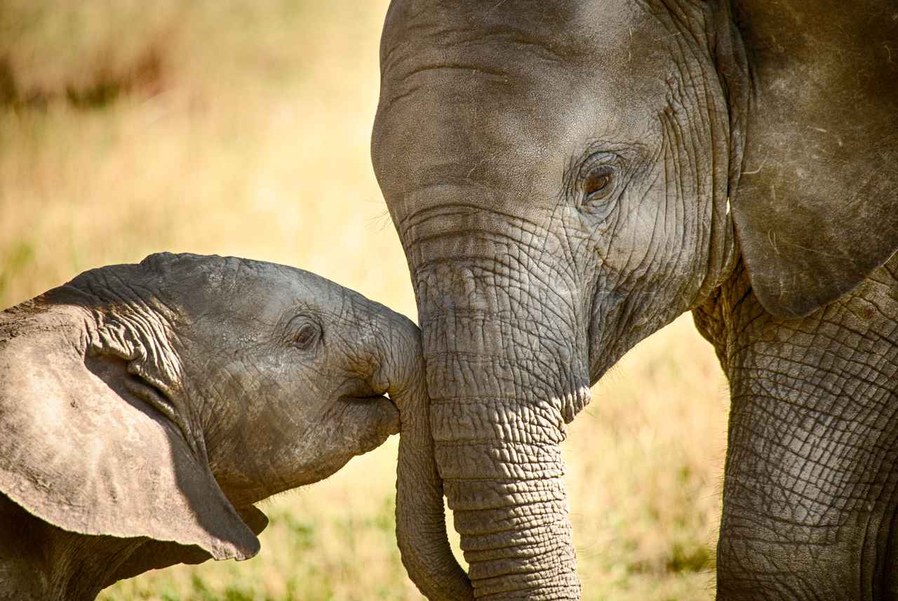 画像2: 象のアクセサリーが訴えるもの