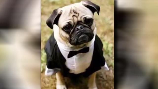 画像: 実際の愛犬の写真 ©NBC 4 Columbus/Twitter
