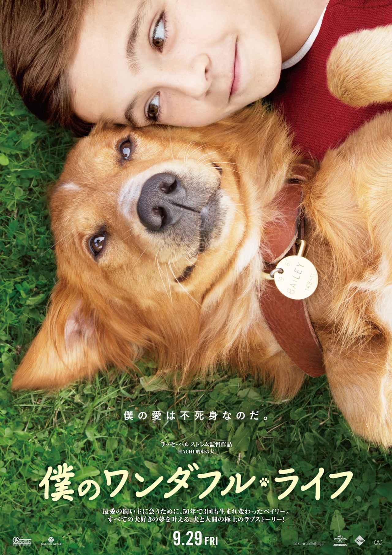 画像3: 原作は愛犬を亡くした恋人のためのベストセラー小説