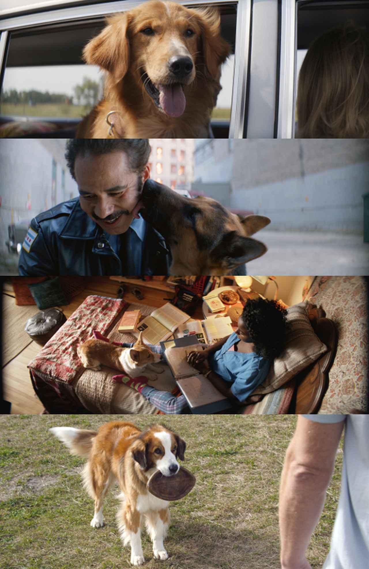 画像2: 原作は愛犬を亡くした恋人のためのベストセラー小説