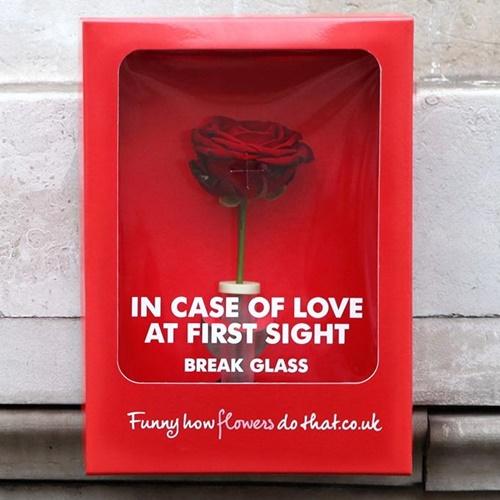 画像: ロマンチックな緊急ボックスが登場