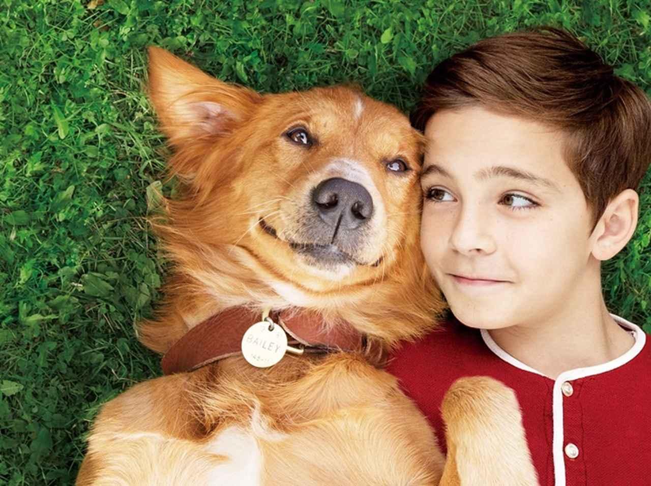 犬のピュアで一途な愛に涙!『僕のワンダフル・ライフ』主演犬の起用秘話も泣ける
