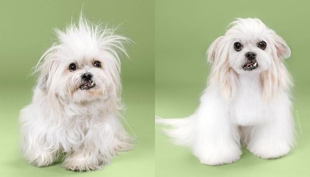 画像3: ペット犬のビフォーアフターが大反響