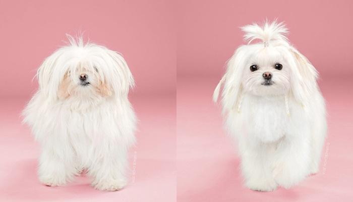 画像9: ペット犬のビフォーアフターが大反響