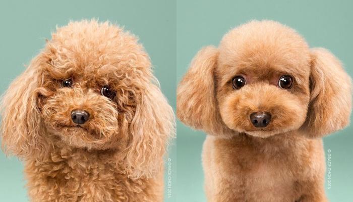 画像1: ペット犬のビフォーアフターが大反響