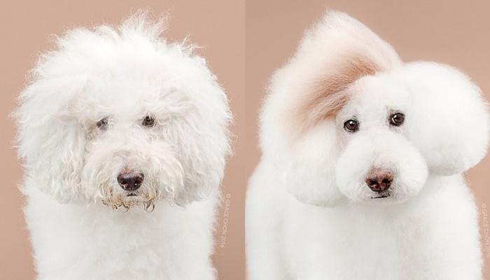 画像8: ペット犬のビフォーアフターが大反響