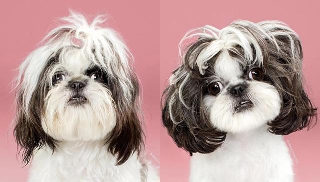 画像2: ペット犬のビフォーアフターが大反響