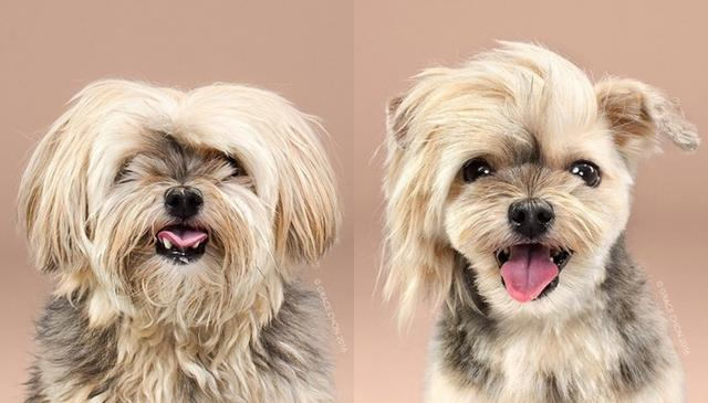 画像4: ペット犬のビフォーアフターが大反響