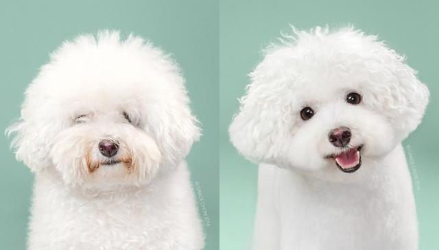 画像6: ペット犬のビフォーアフターが大反響