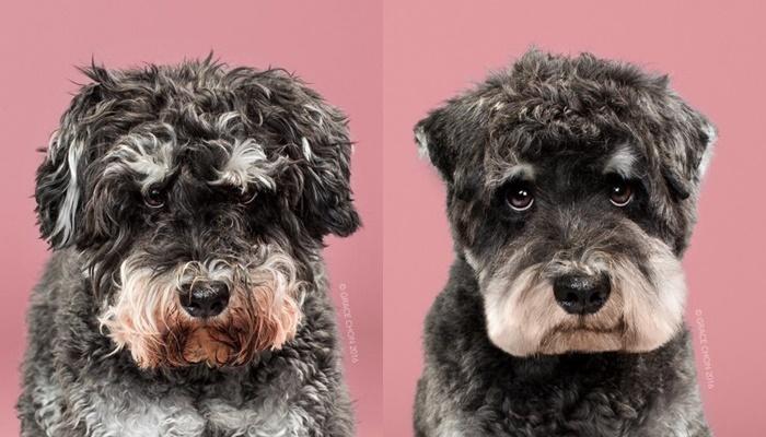 画像5: ペット犬のビフォーアフターが大反響
