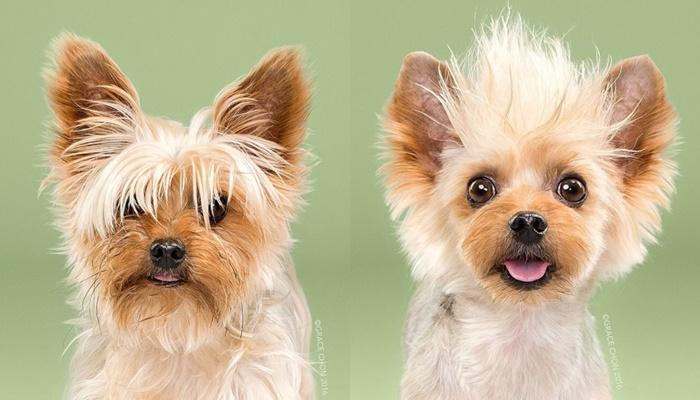 画像7: ペット犬のビフォーアフターが大反響