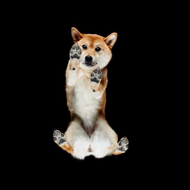 画像6: 犬たちを真下から撮った写真が可愛すぎて悶絶
