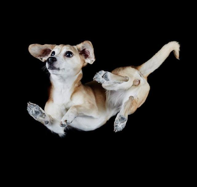 画像2: 犬たちを真下から撮った写真が可愛すぎて悶絶