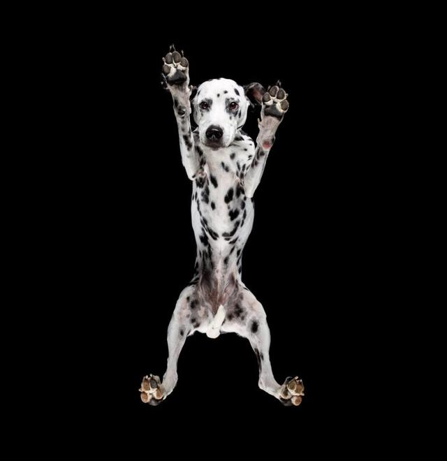 画像1: 犬たちを真下から撮った写真が可愛すぎて悶絶