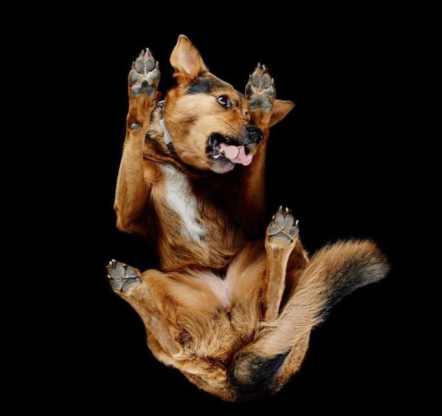 画像3: 犬たちを真下から撮った写真が可愛すぎて悶絶