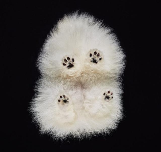 画像4: 犬たちを真下から撮った写真が可愛すぎて悶絶