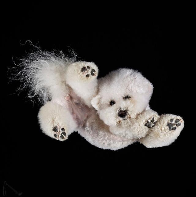 画像5: 犬たちを真下から撮った写真が可愛すぎて悶絶