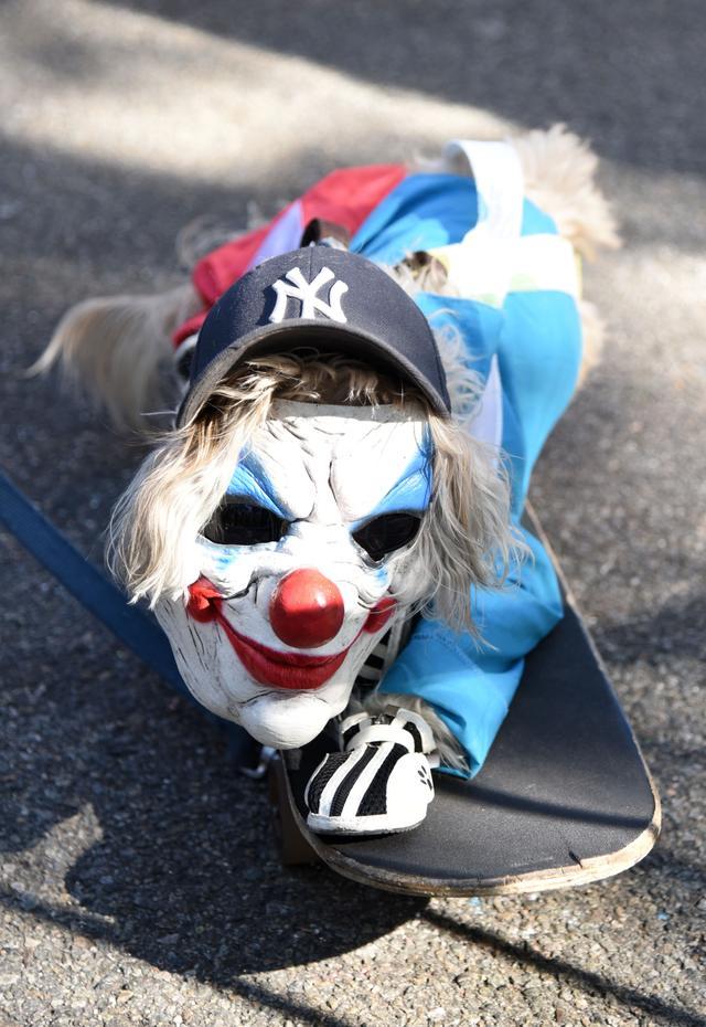 画像4: 毎年恒例ドッグパレードが開催