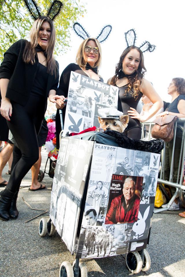 画像3: 毎年恒例ドッグパレードが開催