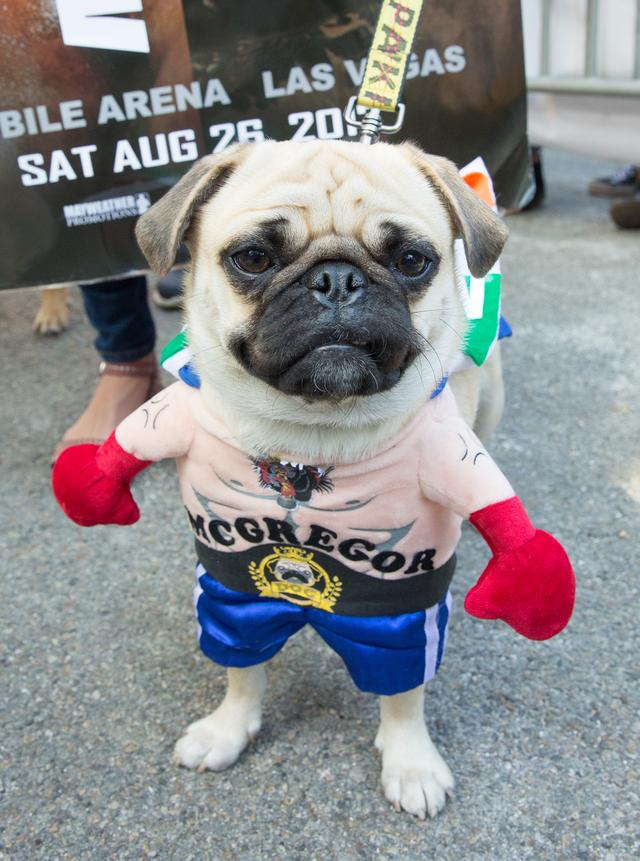 画像7: 毎年恒例ドッグパレードが開催