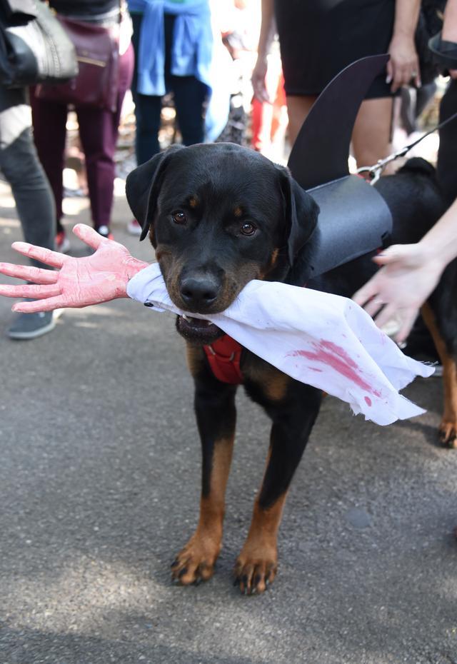 画像6: 毎年恒例ドッグパレードが開催