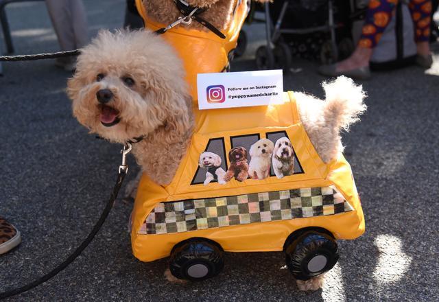 画像5: 毎年恒例ドッグパレードが開催