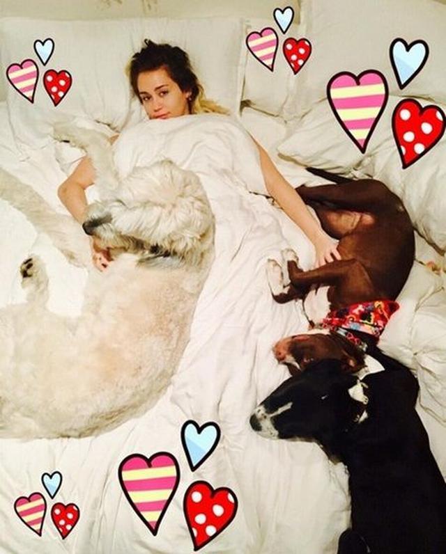 画像: ベッドで愛犬たちに囲まれて。