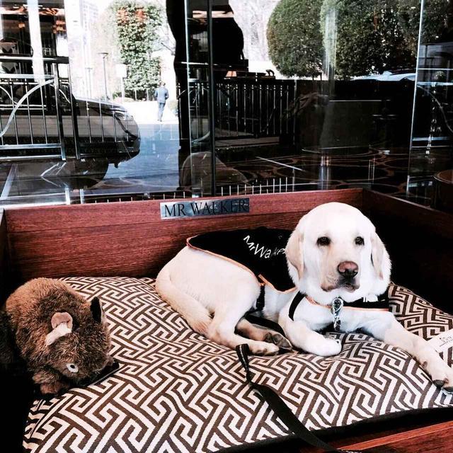 画像2: オーストラリアの名門ホテル、コンシェルジュはなんと犬