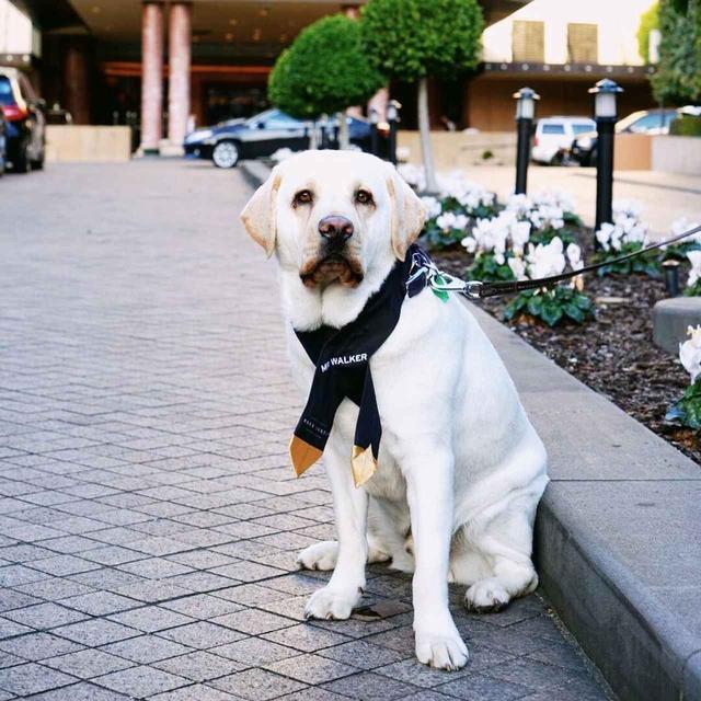 画像1: オーストラリアの名門ホテル、コンシェルジュはなんと犬