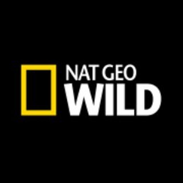 画像: Nat Geo WILD on Twitter twitter.com