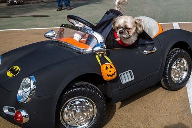 画像: 大人でも羨ましがる人がいそうなマットカラーのバットモビール車に乗って。