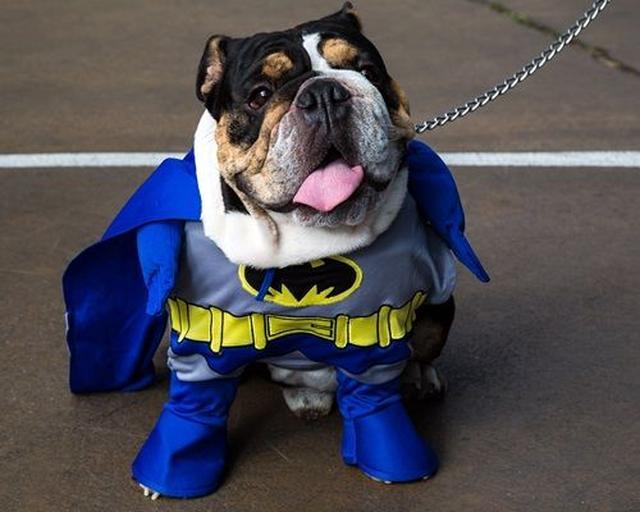 画像: 街の安全はこのバットマンにお任せを!