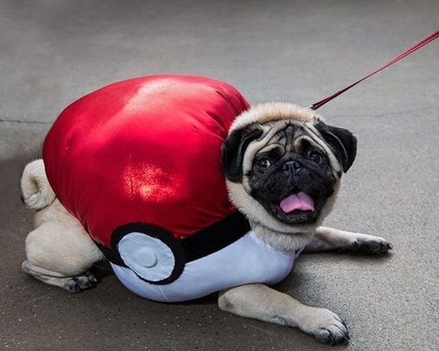 画像: こちらパグはモンスターボールなのか、モンスターボールに捕えられたポケモンなのか、謎のまま。