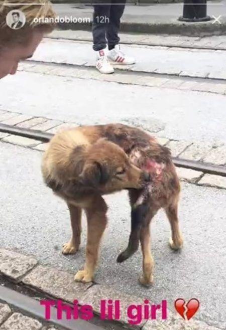 画像2: 【動画】オーランド・ブルーム、中国の路上で出会った傷ついた捨て犬を助ける