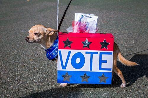 画像: 「投票」と、仮装で大事なメッセージを発信。