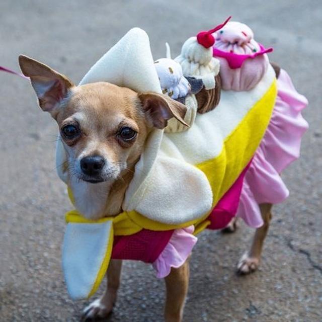 画像: 食べ物人気高し!この子はカップケーキ犬に。