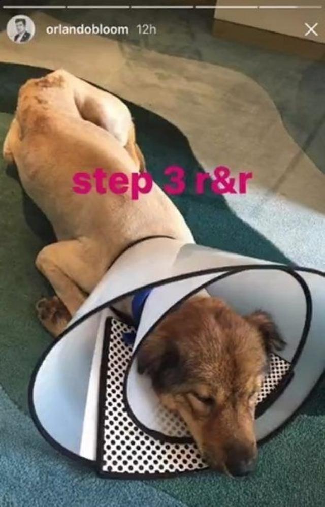 画像4: 【動画】オーランド・ブルーム、中国の路上で出会った傷ついた捨て犬を助ける